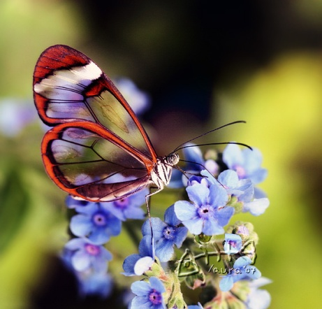 Forget me not...by ~Marmaluke