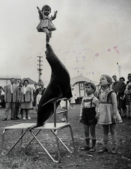 Seal Balancing Doll
