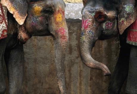 Painted Elephants, Jaipur, India, 1996