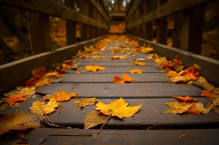 Hello. Autumn!